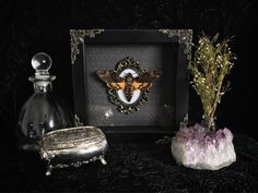 Deaths Head Moth Shadow Box, Taxidermy, Real Butterfly, Framed Butterfly, Preserved Butterfly, Victorian, Memento Mori, Gothic Decor by beyondthedarkveil on Etsy https://www.etsy.com/ca/listing/567731502/deaths-head-moth-shadow-box-taxidermy