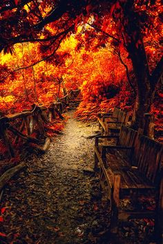 """Love the fence!  """"Autumn in the Forest, Taiwan""""  by Hanson Mao."""
