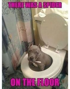 5 Crazy Things Dogs Do When Left Alone At Home - Funny Dog Quotes - These extra-wholesome dog memes are giving us new life. Check out some of our favorite dog memes now and dont forget to pin your favorite! Funny Dog Memes, Funny Dog Videos, Funny Animal Pictures, Funny Dogs, Funny Animals, Cute Animals, It's Funny, Funny Images, Cute Puppies