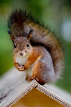 Mal sehen, ob wieder leckere Nüsse aufgefüllt worden sind?!