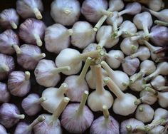 Swarms of Mosquitoes on my patio led me to an old home remedy - Did you know that chopped up garlic makes mosquitoes disappear? I buy minced, dried garlic at local Fiesta grocery stores and sprinkle it around on my patio. I have to stand back as I am using it - mosquitoes will literally swarm out of your plants and bushes to get away from the smell. Works like a charm!! - Click image to find more Gardening Pinterest pins