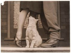 art, black and white, cat, couple, cute, photo, photography, vintage