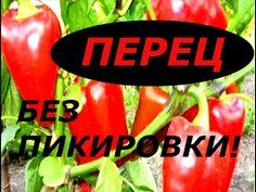 Watermelon, Stuffed Peppers, Fruit, Garden, Sodas, Garten, Stuffed Pepper, Lawn And Garden, Gardens