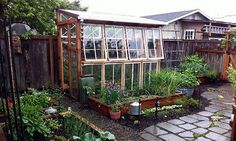 some great re-purposed window green houses