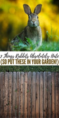 7 Things Rabbits Absolutely Hate (So Put These In Your Garden!) - This article is full of great ideas about how to deter these rabbits from coming into your yard. There are some great ideas in here Slugs In Garden, Garden Insects, Garden Pests, Garden Tools, Garden Fun, Fruit Garden, Water Garden, Rabbit Deterrent, Rabbit Repellent