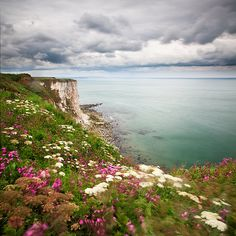 Cliff, flowers and sea