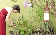 Horta em casa: como fazer e cultivar