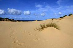 Quasi un dipinto !le dune levigate dal vento e un po' di nuvole in fila indiana. Sardinia/Cerdeña by annika