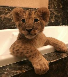Cute Wild Animals, Baby Animals Pictures, Cute Animal Pictures, Animals And Pets, Cute Fantasy Creatures, Beautiful Creatures, Cute Ducklings, Cute Lion, Baby Dogs