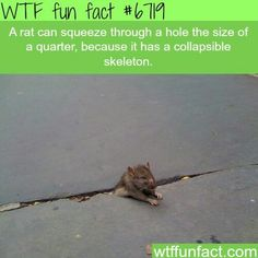 WTF Fun Facts is updated daily with interesting & funny random facts. We post about health, celebs/people, places, animals, history information and much more. New facts all day - every day! Wow Facts, Wtf Fun Facts, True Facts, Funny Facts, Random Facts, Crazy Facts, Cool Fun Facts, Random Animal Facts, Crazy Animal Facts