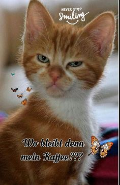 Good Morning, Cats, Animals, Friendship, Coffee, Happy Thursday, Morning Sayings, Good Night Greetings, Cats Funny Sayings