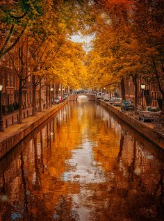Walking the canals through Amsterdam would be an amazing sight during the fall months.