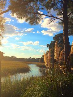 Charleston lowcountry