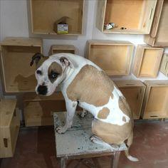 Regalinspektion!!!😅 #obstkistenregal Dogs, Animals, Stoneware, Animales, Animaux, Pet Dogs, Doggies, Animal, Animais