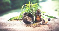 Bei der Qualität werden hier keine Kompromisse eingegangen Plants, Products, Nature, Health, Planters, Plant, Planting