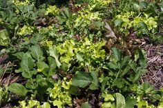Companion Planting Chart - Boost Your Garden With Companion Plants | Organic Vegetable Gardening | Blog | Uncategorised