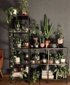 Inside Plants, Room With Plants, House Plants Decor, Plant Decor, Indoor Garden, Indoor Plants, Home And Garden, Plant Aesthetic, Aesthetic Room Decor