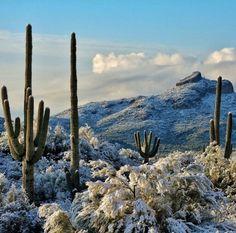 Photo by Steph Belt of Gilbert, AZ