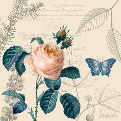 Peach Rose Vintage