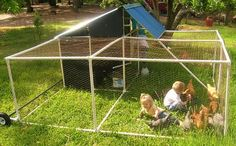 Learn How to Build a Chicken Coop with These 11 Free Plans: Portable Poultry Pen by PVC Plans