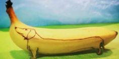 banana art animals cute