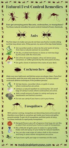 mejores de de imágenes Pest ControlControl 12 plagas Ref nPk0wX8O