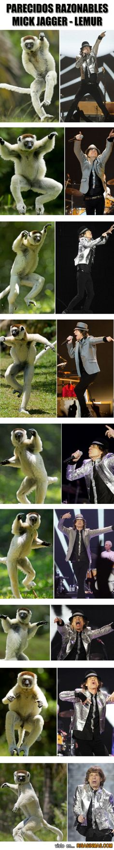 Parecidos razonables: Mick Jagger - Lemur.