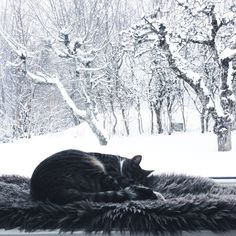 cute dark gray cat on a cozy sleeping place before the beautiful winter … - Katzen Animals And Pets, Cute Animals, Winter Images, Photo Chat, Winter Wonder, Grey Cats, Winter Scenes, Crazy Cat Lady, Beautiful Cats