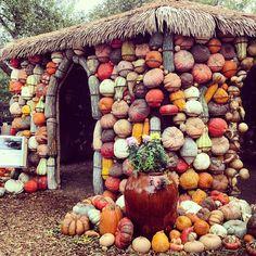 "@amnichols's photo: ""Pumpkin gourd house #ftcdallas #dallas"""