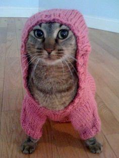 Dexie poses in his new homemade hoodie