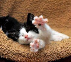 Pretty Cats, Beautiful Cats, Animals Beautiful, Cute Baby Animals, Animals And Pets, Funny Animals, Sleepy Animals, Funniest Animals, Small Animals