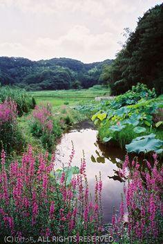 Satoyama. Onoji, Machida, Tokyo   のどかな里山風景~in 町田市小野路町
