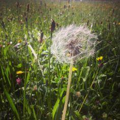 Verano Blur, Dandelion, Flowers, Plants, Make Envelopes, Summer Time, Fotografia, Dandelions, Plant
