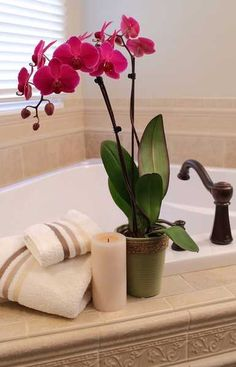 Bathrooms provide the perfect conditions for growing orchids because they're warm and steamy - although they must have a source of natural light too.