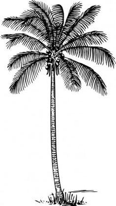Coconut Palm clip art  some kind of coconut tree representation for 'natural'