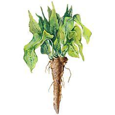Herbář — Česká televize — Herbář — Česká televize Korn, Plant Hanger, Plants, Decor, Decoration, Plant, Decorating, Planets, Deco
