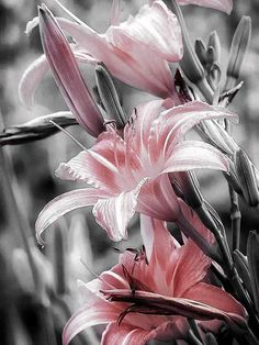 I have a really appreciation for Lilies... all the different kinds of Lilies. callayilies, tiger lilies, easter lilies, any colors... whatever