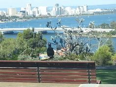 Sharing the view of my home town with a magpie...