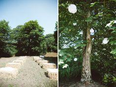 Pom poms in the tree