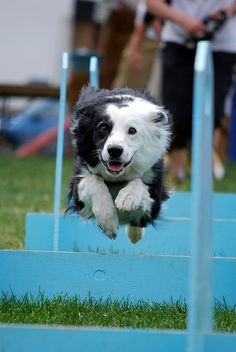 Flyball Relay Race by LHTP, via Flickr