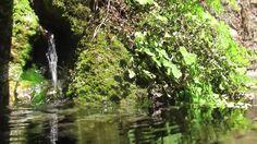 3 HORAS com Sons da Natureza Água Pássaros HD para Relaxar e Meditação