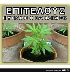 Funny, Plants, Funny Parenting, Plant, Hilarious, Fun, Planets, Humor