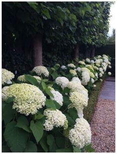 flower backyard ideas 3