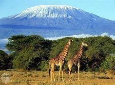 KENYA. Forest, beaches, mountains and safari all in one. Mostly for the giraffes!!