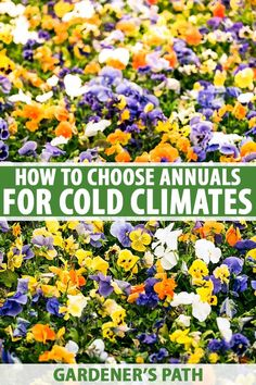 Living in a cold climate doesn't have to mean you can't enjoy vivid colors in your garden. Learn how to select the best flowering annuals suitable for colder growing zones, and you can dazzle your neighbors with vibrant displays of color throughout the growing season. Read more on Gardener's Path. #annuals #gardenerspath Annual Flowers For Shade, Shade Flowers, Growing Flowers, Planting Flowers, Flower Gardening, Gardening For Beginners, Gardening Tips, Wonderful Flowers, Growing Seeds
