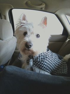 Shelby in her car seat ready for a ride!!