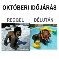 Weather in October morning VS evening Animals And Pets, Funny Animals, Cute Animals, Funny Quotes, Funny Memes, Me Too Meme, Cool Girl, Haha, Funny Pictures