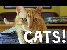 This is AWESOME!!! Best Cat Video Compilation - The Friskies Awards 2014 - YouTube