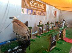 En DECDLT criticamos la utilización de animales en el marcado medieval de Córdoba cuando está prohibida la utilización de animales en circos, atracciones...