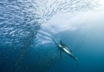The Underwater Project on Behance